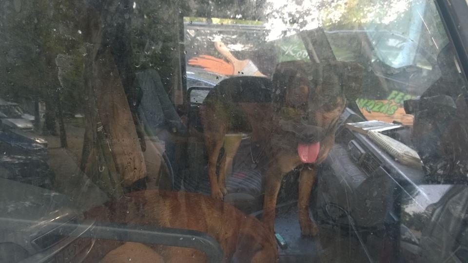 Rendőrök mentettek ki két kutyát egy felforrósodott autóból a Városligetben
