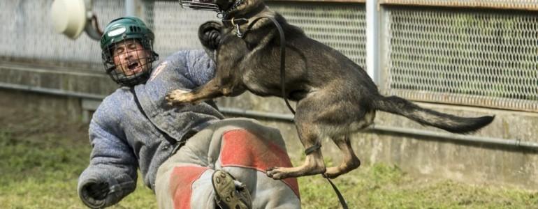 Kőkemény kiképzésben részesülnek a büntetés-végrehajtásban dolgozó kutyák