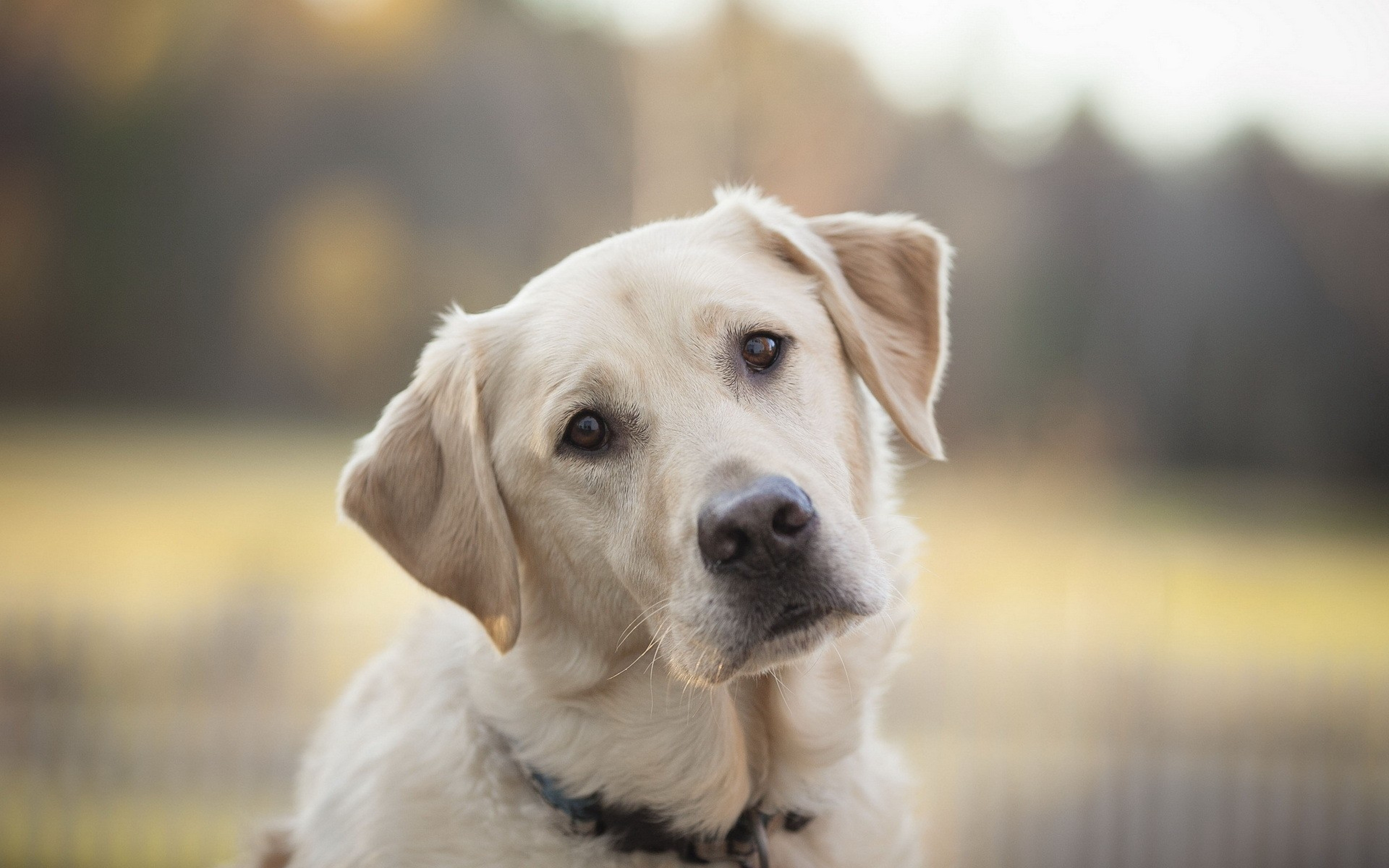 7 jel, hogy a kutyusod egészsége veszélyben lehet