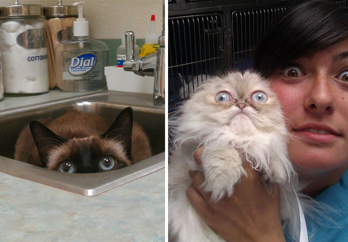 23 macska, aki retteg az állatorvostól