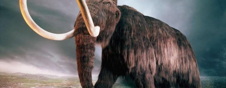 Az ember okozta a nagy testű őskori állatfajok kihalását