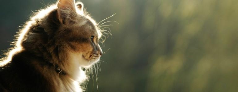 Mit akar velem tudatni a macskám? Segítünk!