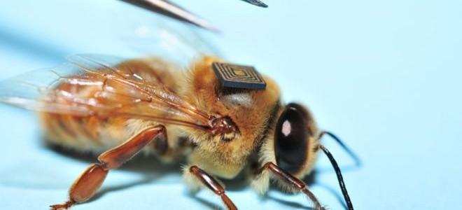 Méhek ezreit látták el nyomkövető szenzorokkal egy kutatási programban