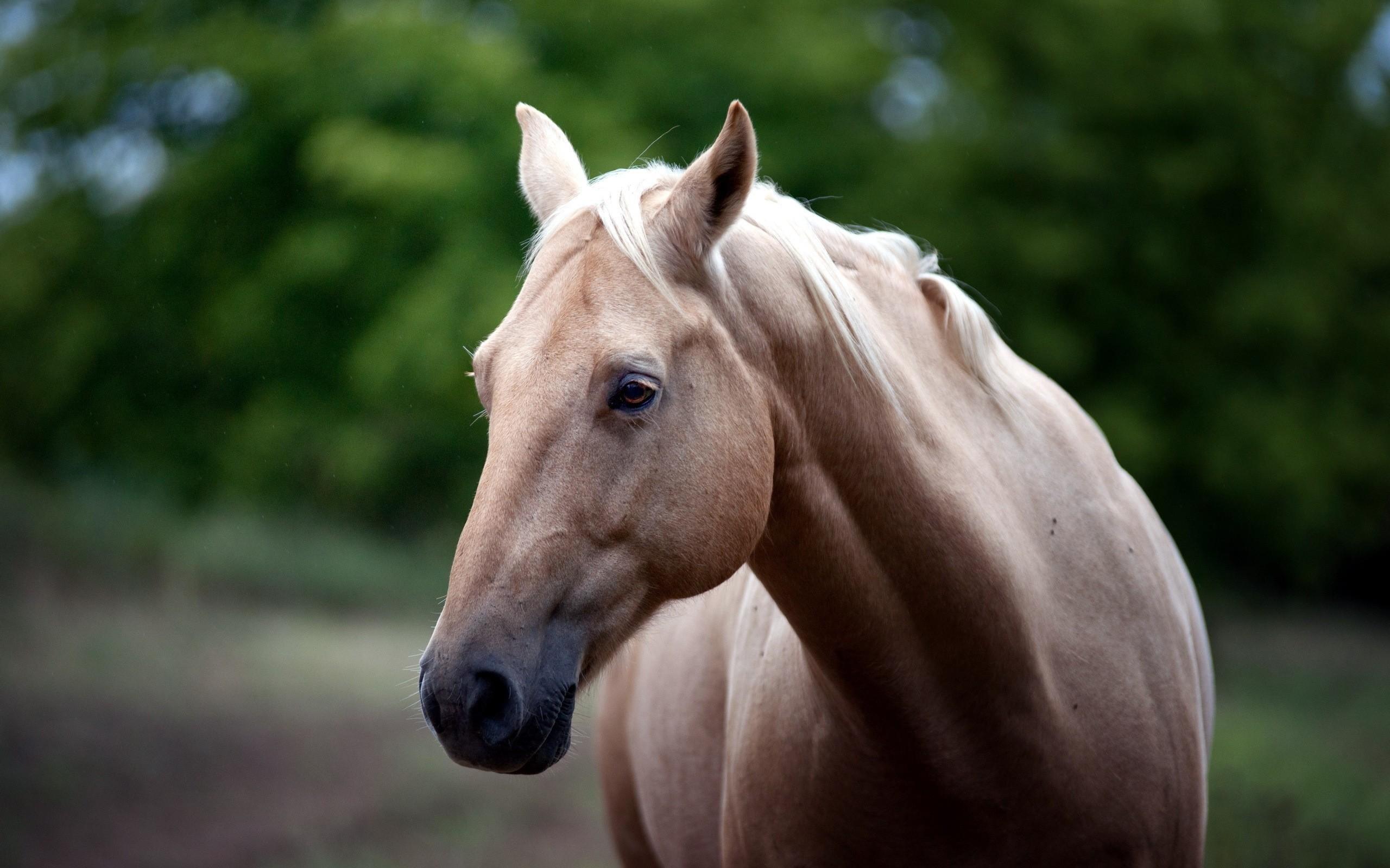 Emberi arckifejezésekkel kommunikálnak a lovak