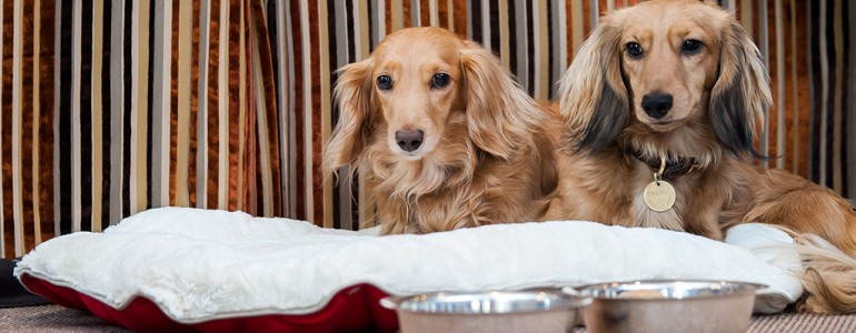 Hatalmas az igény a kutyabarát turizmus iránt