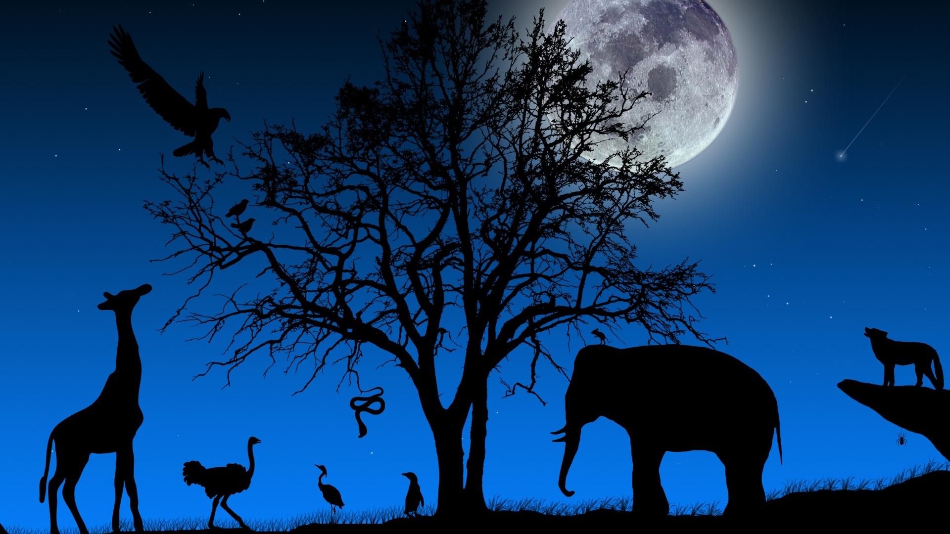 Ismét Állatkertek Éjszakája augusztus utolsó péntekén