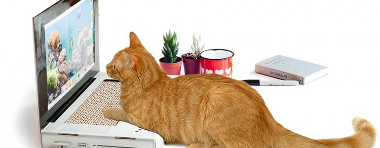 Laptop cicáknak? Már ilyen is van!