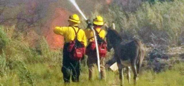 Égő erdőből mentették ki, hálából a tűzoltókkal maradt ez a szamár
