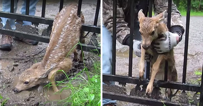 10 pillanat, amikor az emberek önzetlenül segítettek az állatokon