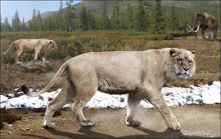 Barlangi oroszlánok eddigi legnagyobb leletegyüttesére bukkantak Oroszországban