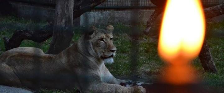 Állatkertek Éjszakája a Kecskeméti Vadaskertben