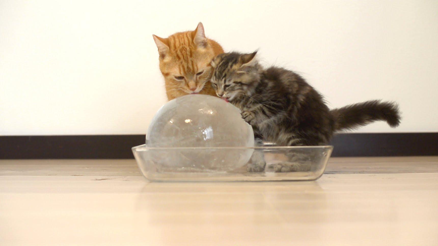 Itt a legjobb módszer, amivel a macskád túlélheti a kánikulát