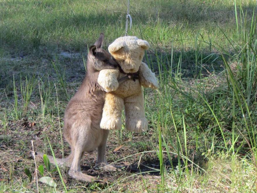 Plüssmackót dédelget az árva kengurubébi
