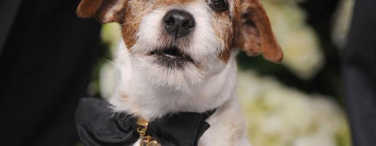 Elhunyt Hollywood egyik leghíresebb kutyája