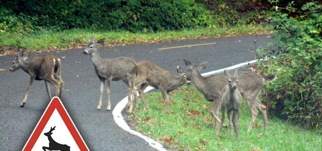 A vadászkamara fokozott figyelmet kér az autósoktól