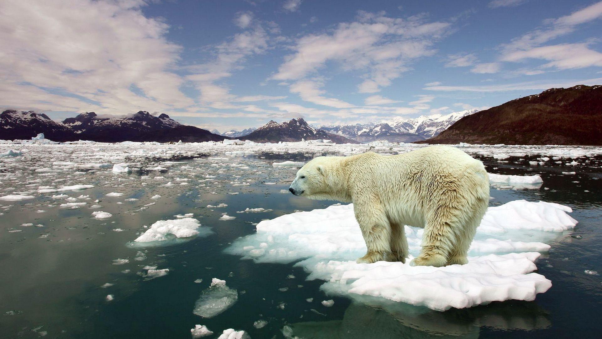 Azonnal lépni kell a klímaváltozás megállítása érdekében