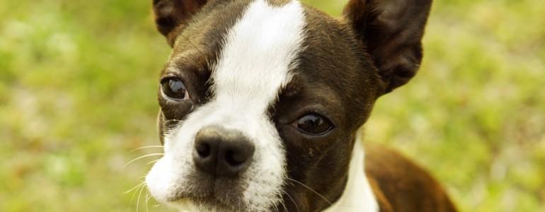 7 kisebb termetű kutyafajta gyerekes családoknak