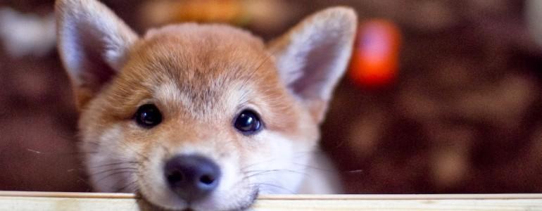 6 kutyafajta, aki jobban hasonlít a macskákra, mint gondolnád