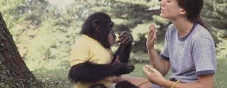 Megható történet arról, hogyan reagált a csimpánz, mikor gondozója elvesztette kisbabáját