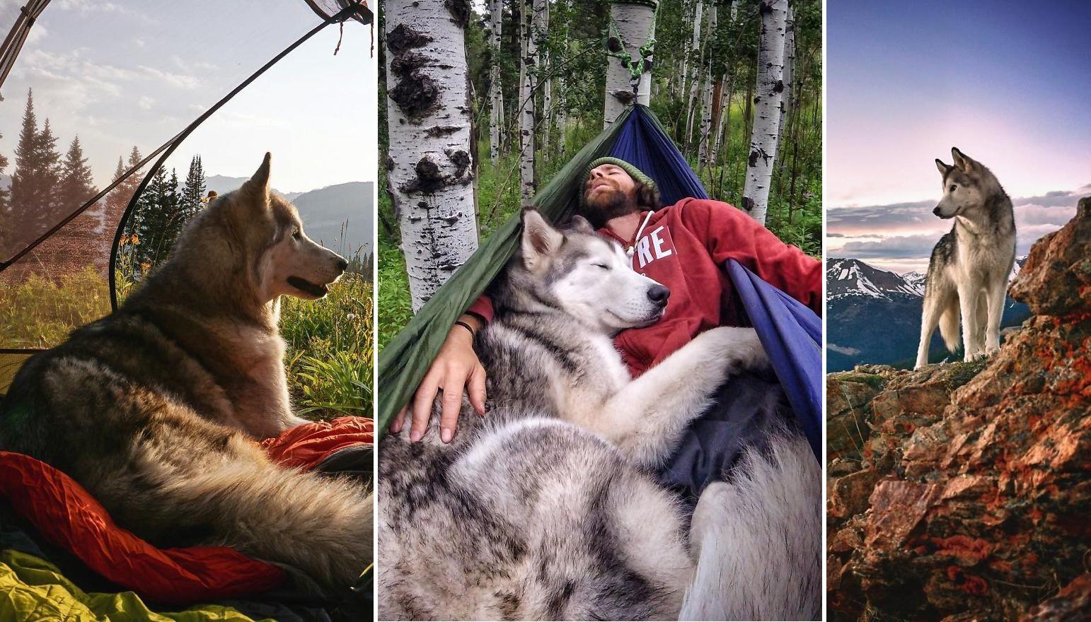 Csodás fotók egy kutyus kalandos életéről, amire mindannyian irigykedünk