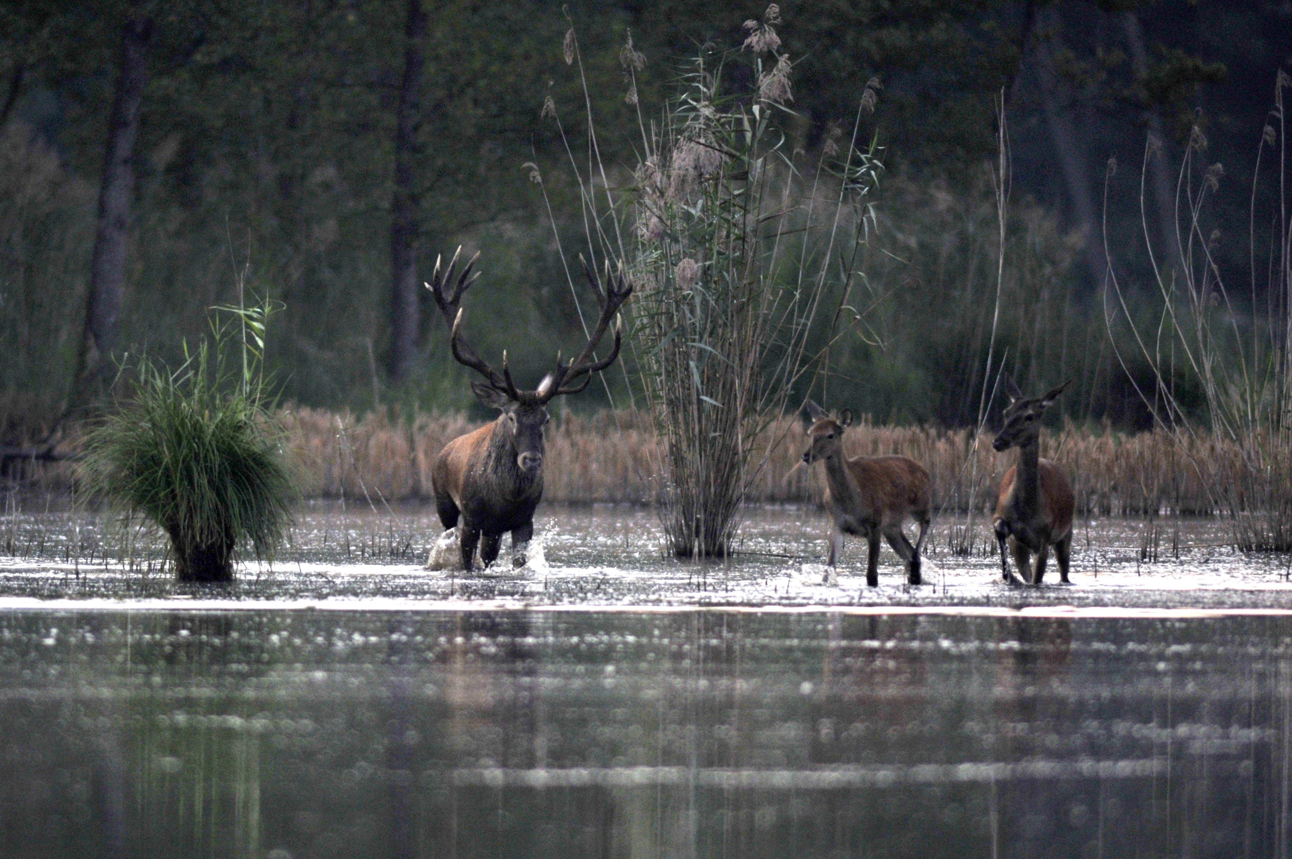 Így hűsölnek a szeptemberi hőségben a barcsi erdészet állatai