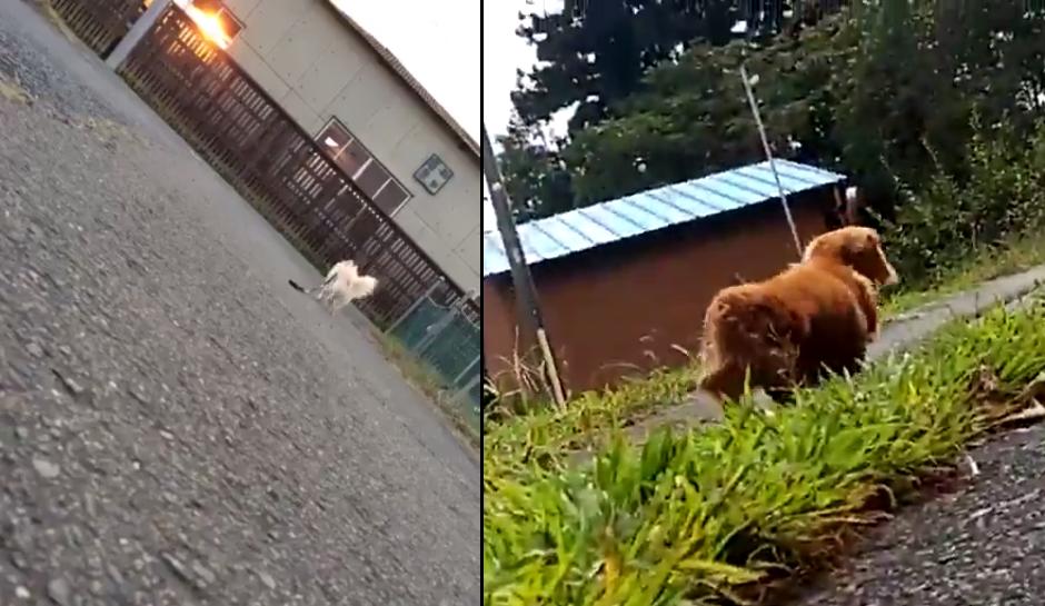 Így reagálnak a kutyák, ha a gazdájuk elájul