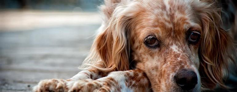 Segítség, allergiás a kutyám! Mit tegyek? – 3. rész