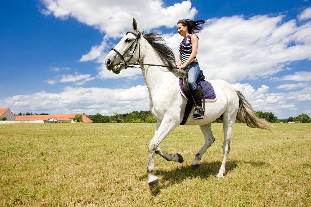 Magyarország is exportálhat élő lovat Kínába