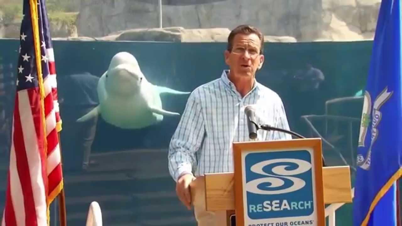 Az internet sztárja lett a kíváncsiskodó fehér delfin