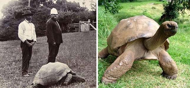 Csupán 17 év múlva 200 éves lesz a világ legidősebb teknőse