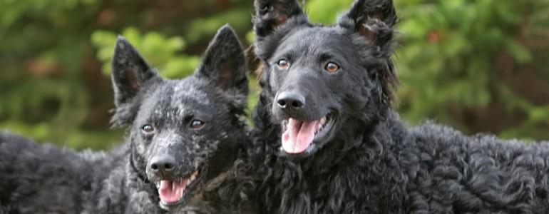 6 ritka kutyafajta, akit csak kevesen ismernek