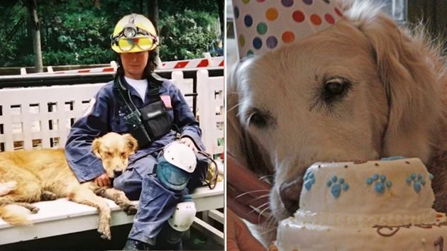 Így ünnepelte 16. születésnapját az utolsó kutyus, aki részt vett a szeptember 11-ei mentésben