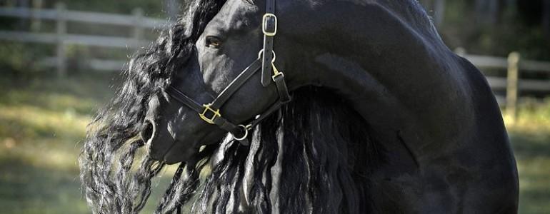 Ismerd meg a világ leggyönyörűbb lovát
