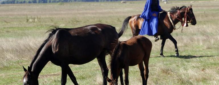 Hazánkban őshonos ló- és juh fajták tartására alkalmas telepet adtak át Szentistvánban