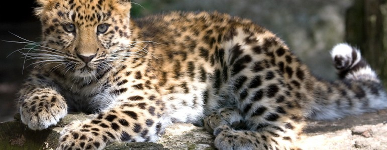 A veszélyeztetett fajok megmentésének fontossága az állatok világnapja legfőbb témája idén