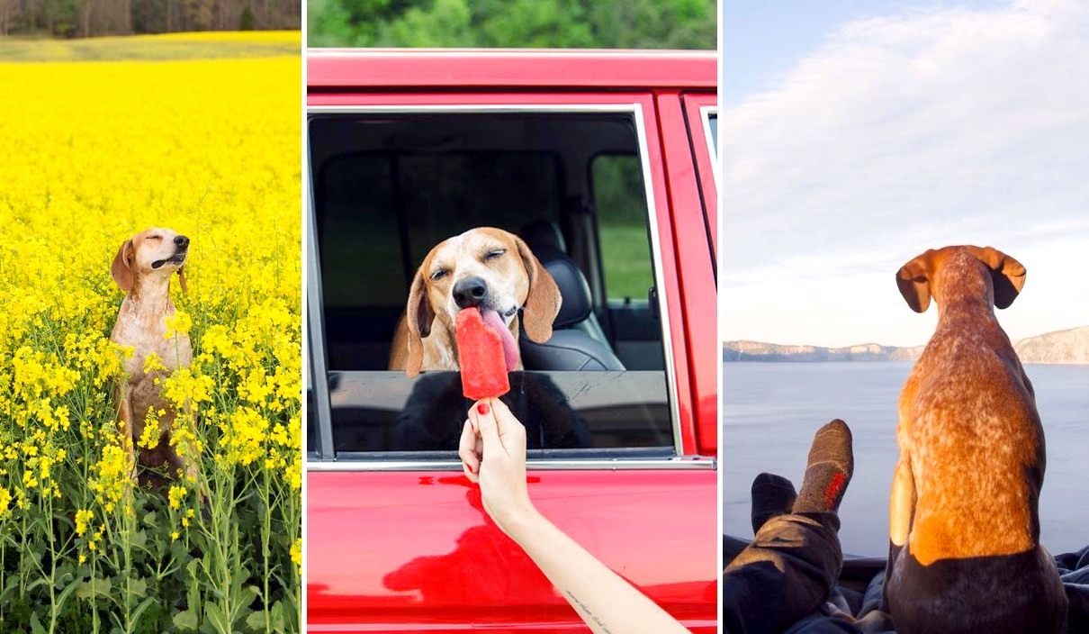 Csodálatos fotókon egy kutyus élete a menhely után