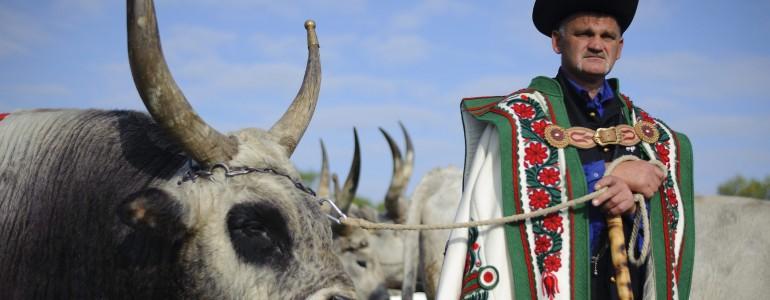 Szent Dömötör-napi behajtási ünnep a Hortobágyon