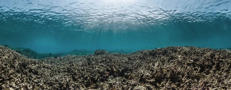 Összeomlás fenyegeti az óceáni táplálékláncokat