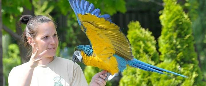 Így zajlik a papagáj-show a Nyíregyházi Állatparkban
