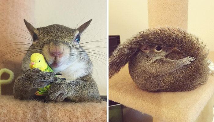 A család legcukibb tagja lett a befogadott mókus