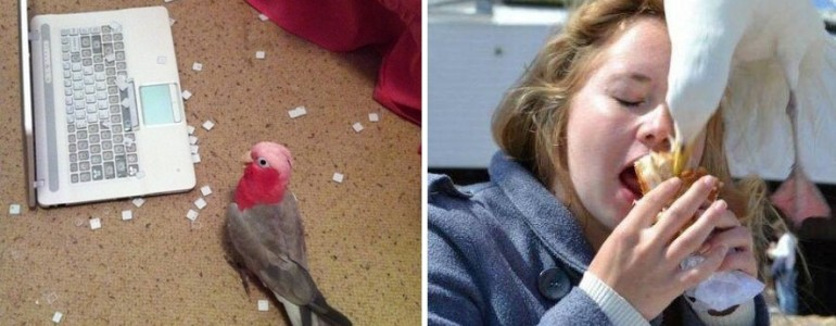 16 bizonyíték, hogy a madarak is tudnak rosszalkodni