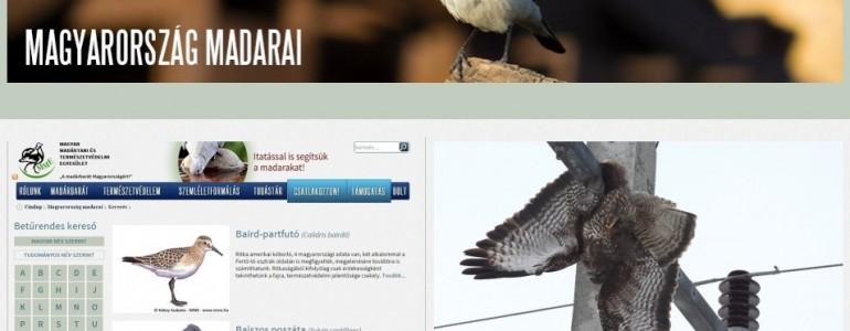 Mostantól interneten is elérhető Magyarország madárfajainak részletes adatbázisa