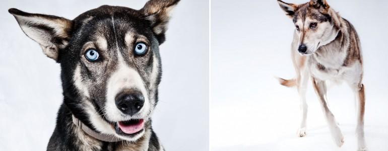 Csodás képek a fagyos tájak urairól, a szánhúzó kutyákról