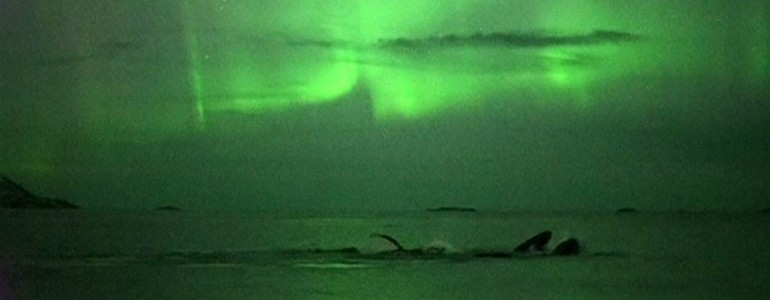 Káprázatos a sarki fény előtt úszó bálnák látványa