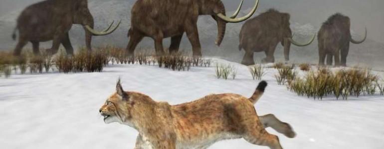 Megtalálták az Ibériai-félsziget egyik első ibériai hiúzának maradványait