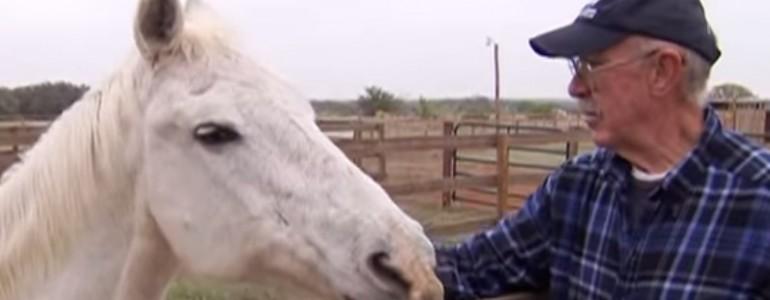 Utazgatni akart ez a nyugdíjas pár, de inkább lovak életét mentik meg életük hátralévő részében