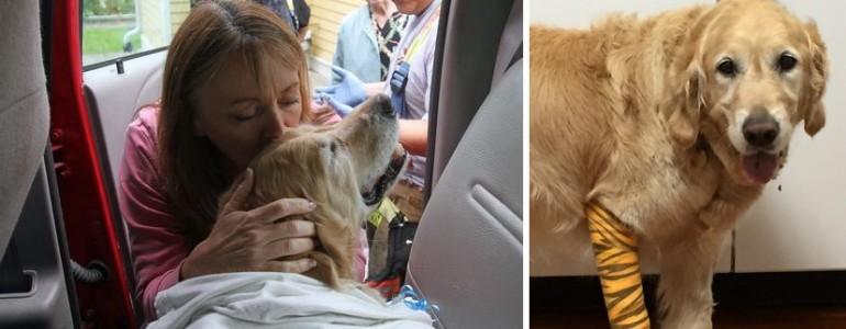 Hazatérhetett a kutyus, aki busz elé vetette magát, hogy megmentse vak gazdáját