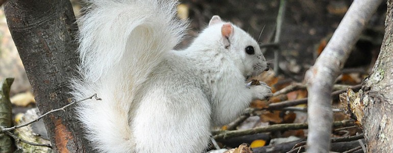 Hihetetlenül ritka fehér mókust láttak az Egyesült Királyságban