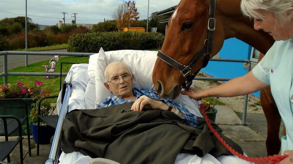 Halálos ágyánál búcsúzott el lovától az idős bácsi