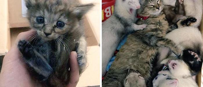 Vadászgörények nevelték a cicát, ezért ő is annak hiszi magát